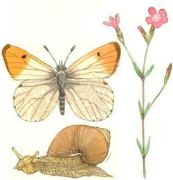 Eksempel på tegning i farver med dyr og planter