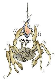 Krabbe i humoristisk stil