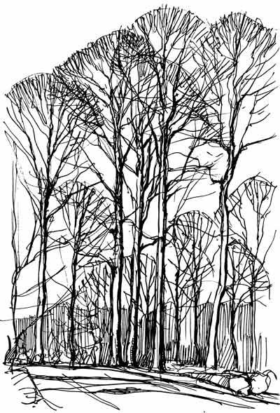 Bøgetræer om vinteren
